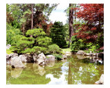 Japanese Garden Pond