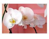 Hawaiian Orchids Number Three