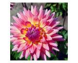 Delilah Flower Detail