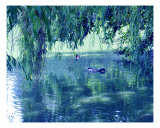 Willows And A Duck Pond
