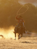 Cowboy Galloping While Swinging a Rope Lassoo at Sunset  Flitner Ranch  Shell  Wyoming  USA