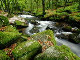 Golitha Falls  Bodmin  Cornwall  UK