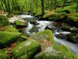 Golitha Falls, Bodmin, Cornwall, UK Papier Photo par Ross Hoddinott