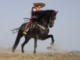 Charro on a Black Andalusian Stallion Galloping in Ojai  California  USA
