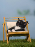Domestic Cat  Kitten Sleeping on a Deckchair