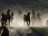 Cowboys Driving Horses at Sombrero Ranch  Craig  Colorado  USA