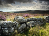 Dry Stone Wall  Near Birch Tor  Dartmoor Np  Devon September 2008