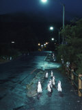 Black Footed Jackass Penguins Walking Along Road at Night  Boulders  South Africa
