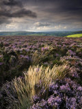 Heather and Moorland View  Near Birch Tor  Dartmoor Np  Devon  UK  August 2008