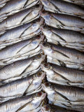 Freshwater Fish for Sale at Manaus Fish Market  Amazonia  Brazil
