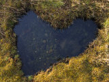 Heart-Shaped Pool on Saltmarsh  Argyll  Scotland  UK  November 2007