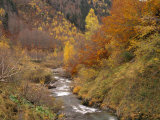 River Flowing Through Autumnal Forest in the Valley of Varrados  Val D&#39;Aran  Catalonia  Pyrenees