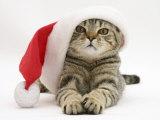 Tabby Cat Wearing a Father Christmas Hat