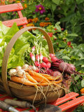 Freshly Harvested Carrots  Beetroot and Radishes in a Rustic Trug in a Summer Garden  England  July