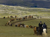 Icelandic Horses and Riders  Riding Near Landmannalaugar  Iceland