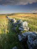 Dry Stone Wall and Moorland Grassland  Late Evening Light  Dartmoor Np  Devon  Uk September 2008
