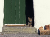 Tabby Cat Resting in Open Doorway  Italy