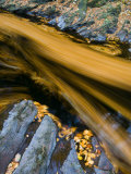 River North Esk Loaded with Beech Leaves  Angus  Scotland  UK  October 2007