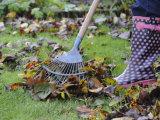Gardener Raking Fallen Leaves with Lawn Rake  UK  November 2008