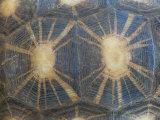 Radiated Tortoise Shell, Berenty Reserve, Madagascar Papier Photo par Edwin Giesbers