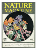 Nature Magazine - View of Flowers  c1927