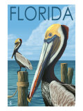 Brown Pelicans - Florida  c2008