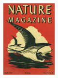 Nature Magazine - View of Sea Gulls Grazing the Water  c1948