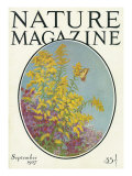 Nature Magazine - View of Blooming Flowers and a Butterfly  c1927