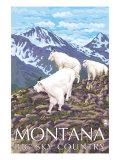 Montana - Big Sky Country - Mountain Goats  c2008