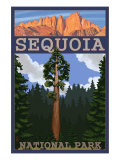 Sequoia Nat'l Park - Sequoia Tree and Palisades - Lp Poster  c2009