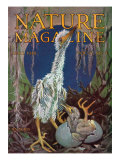 Nature Magazine - View of a Stork with a Baby Stork Hatching  c1928