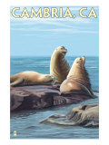 Cambria  California - Sea Lions  c2009