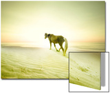 Horse Trudging through the Sand