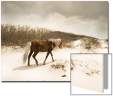 Chocolate Horse Walking through Sand Dunes
