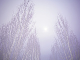 Dense Fog Obscuring Trees and Moonlight