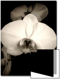 Sepia Orchid