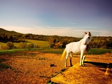 White Horse Fenced into Countryside Pen