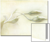 Study of Entwined White Flowers