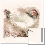 Light Sussex Hen