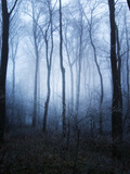 Forest and Brush in Dense Fog