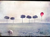 Lamb by Row of Trees and Red Balloon