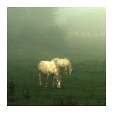 White Horses Field I