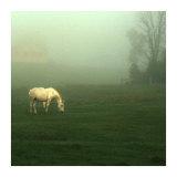 White Horses Field II