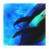 Dolphin I