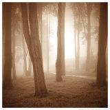 Woods Study II