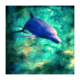 Dolphin II