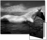 White Horse Swimming