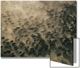 An Aerial View of a Herd of Wildebeests