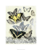 Butterfly Habitat I