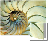 Close-up of Nautilus Shell Spirals Acrylique par Ellen Kamp